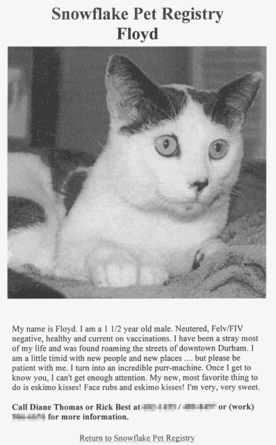 cat-floyd-adoption-page.png