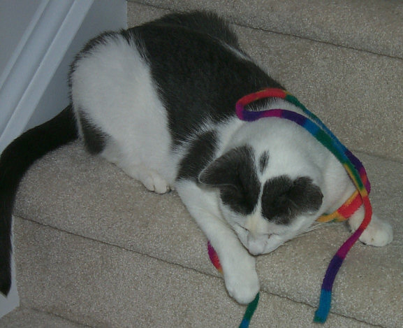 Floyd tangled up in a toy
