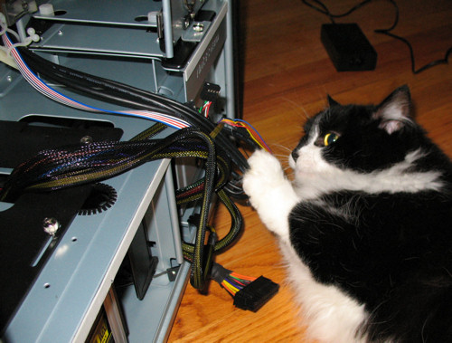 PC build, my cat helper