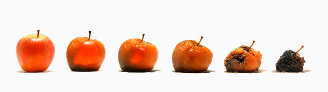 an apple goes bad