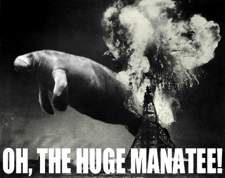 Oh-the-huge-manatee